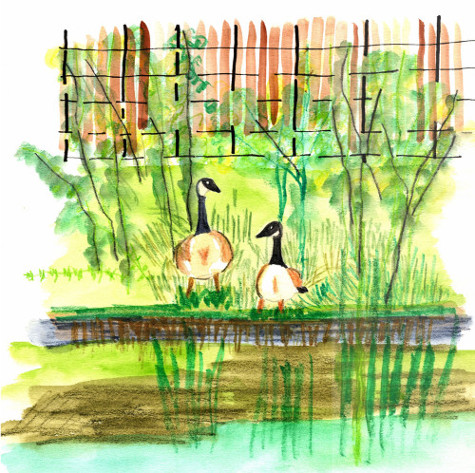 Sketch of ducks in Clissold Park, Stoke Newington in mixed media.