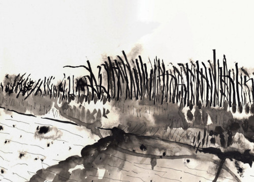 This drawing of reeds blown by the wind is part of the 805 steps series of drawings along the Hertford Union canal made in 2015.